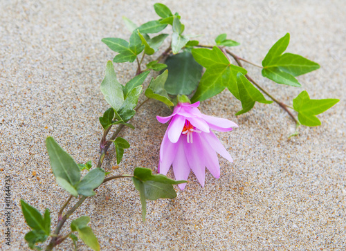 Lierre Et Fleur Rose Sur Le Sable Stock Photo And Royalty Free