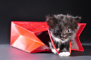 black kitten walking out of gift bag