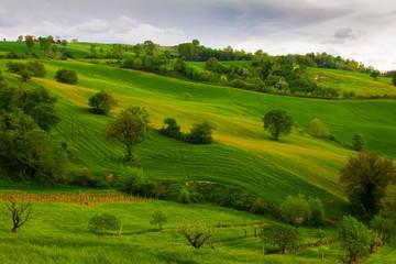Poster de jardin Vignoble Paesaggio collinare rurale nella regione Marche