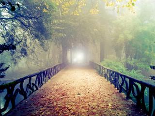 Obraz A luz do outro lado da ponte - ambiente de misticismo e de mistério - fototapety do salonu