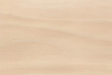European Beech texture wood