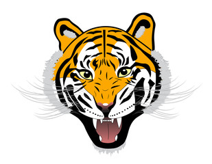 Tiger anger head on a white background
