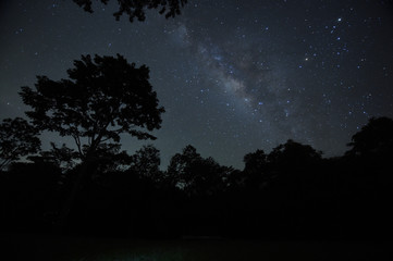 Night sky with the Milky Way over the forest and trees