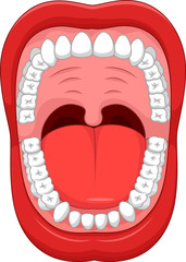 Parts of Human mouth. Open mouth and white healthy tooth