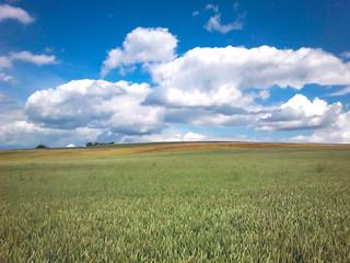 Blick auf ein Getreidefeld mit Wolken und blauem Himmel