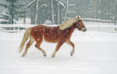 Brown horse in snowfall
