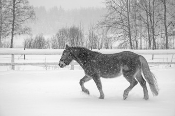 Horse in snowfall