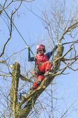 European Tree Worker bei der Arbeit im Baum