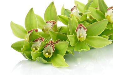 Obraz Orchidea na białym tle - fototapety do salonu