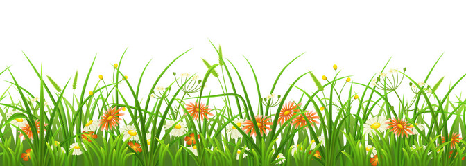Wall Mural - Seamless green grass with flowers on white background