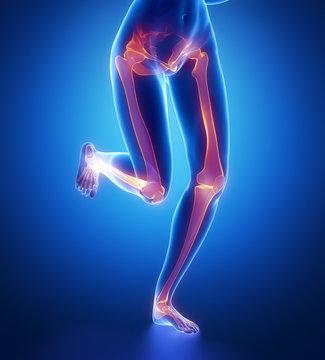 Focused on leg bones anatomy