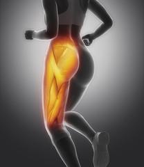Thigh muscle female anatomy