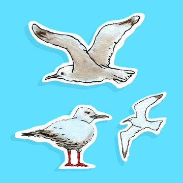 Vector Drawing Watercolor Seagull