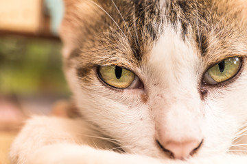 Looking in the eye of cat