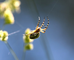 The spider is sitting on a spider web