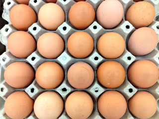 Egg panel