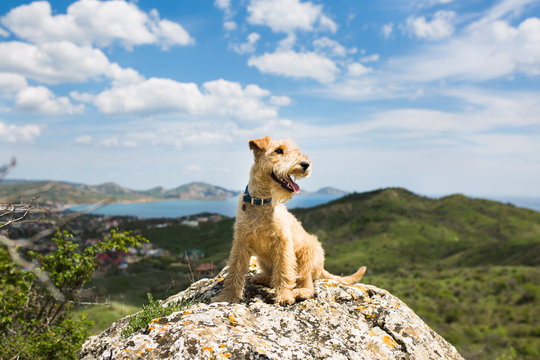 Dog sit on a rock on a background of mountains, sea and blue sky