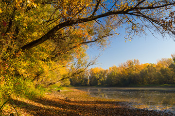 Autumn scenery inside Natural reserve in South Slovakia.