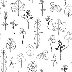Seamless pattern with herbs and leaves