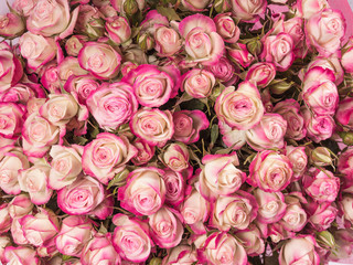 Small pink roses bouquet close up
