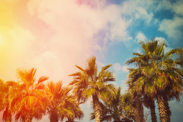 Tropic palm trees against sky at sunset light