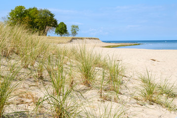 Dune grass on a beach