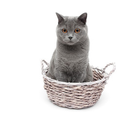 gray cat sitting in a wicker basket on a white background