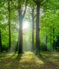 grüner Wald im Sommer mit Gegenlicht - fototapety na wymiar