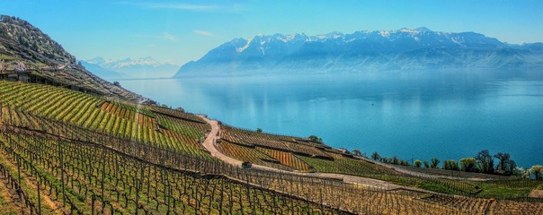 Lake Geneva and terraced vineyards of Lavaux in Swistzerland.
