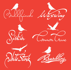 Birds lettering with silhouette set