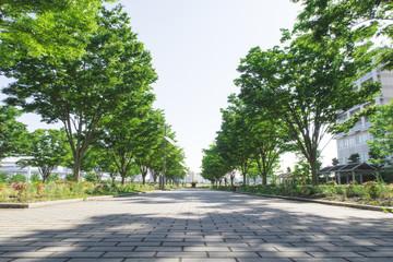 並木道 東京臨海広域防災公園