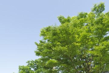 新緑の枝葉