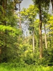 Mischwald im Sonnenlicht