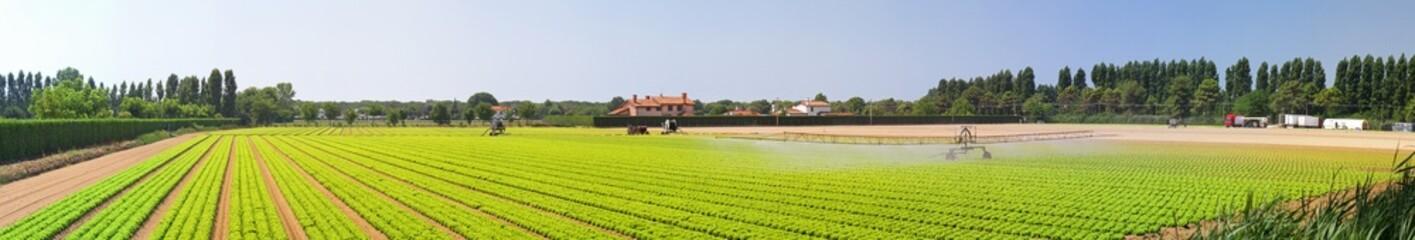 Acrylic Prints Village Panoramic salad field