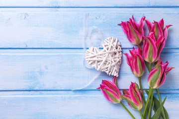 Background with fresh  bright pink tulips flowers and decorative