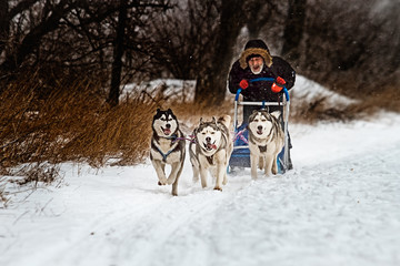 Musher hiding behind sleigh at sled dog race on snow.