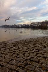 Bords de Saône en hivers