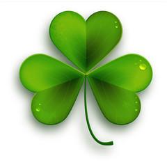 Saint Patricks Day symbol, vector realistic shamrock leafsolated on white