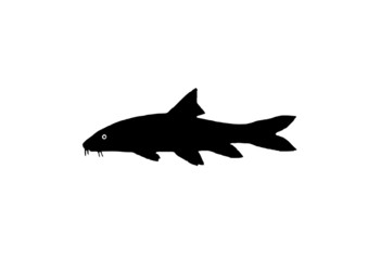 Silhouette of the fish barbel