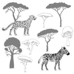Leopard, zebra and savanna trees