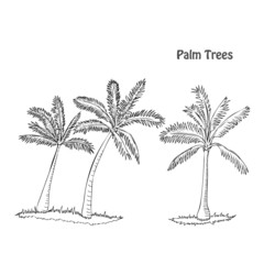 Palm trees. Set of sketches