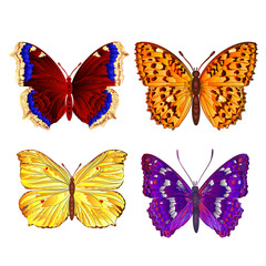 Butterflies various vector