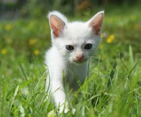 kitten in green grass