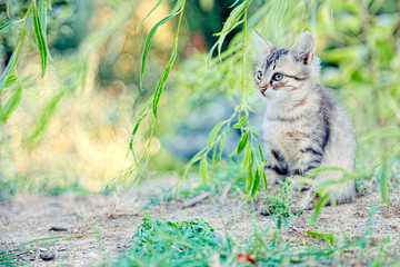 Kitten hiding in the foliage looks a small prey immobile