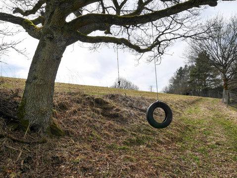 Baum Schaukel
