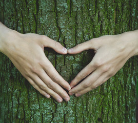 Hands making a heart shape on a trunk of a tree. Bark texture. E