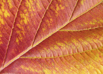 close-up autumn leaf red and yellow
