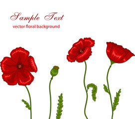 Vector illustration of red poppies on white background