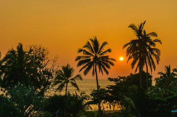 Romantic sunset on Caribbean beach with palms