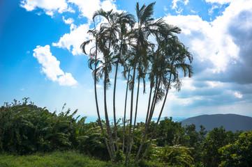 тропические деревья